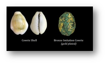 China Cowry Shell Evolution
