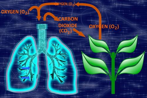 CO2 Cycle